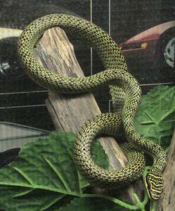 ornate flying snake