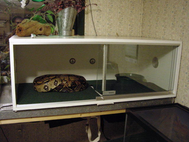 How To Build Enclosures For Reptiles Custom Snake Cages Arboreal Keeping