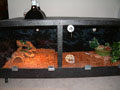 home made reptile cage or house