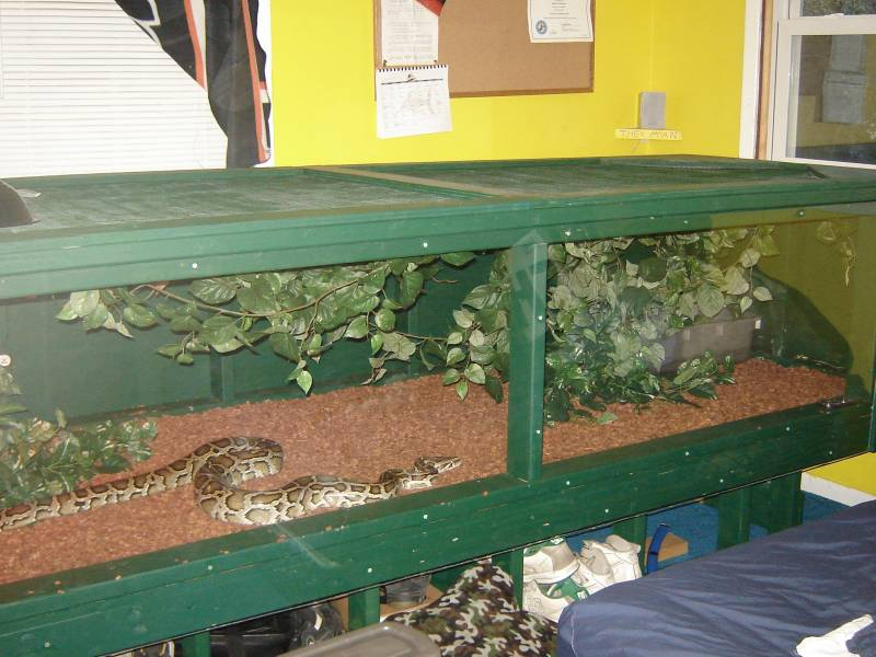 How to build enclosures for reptiles - custom snake cages ...